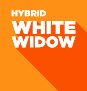 Hybrid – White Widow